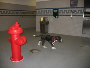 Pittsburgh pet relief area in the Delta Terminal
